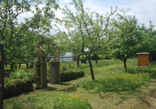"""Obstkolumne """"Streuobst für alle"""": Lars Frenzke, erklärt, was rund um die Pflanzung von Obstbäumen zu beachten ist"""