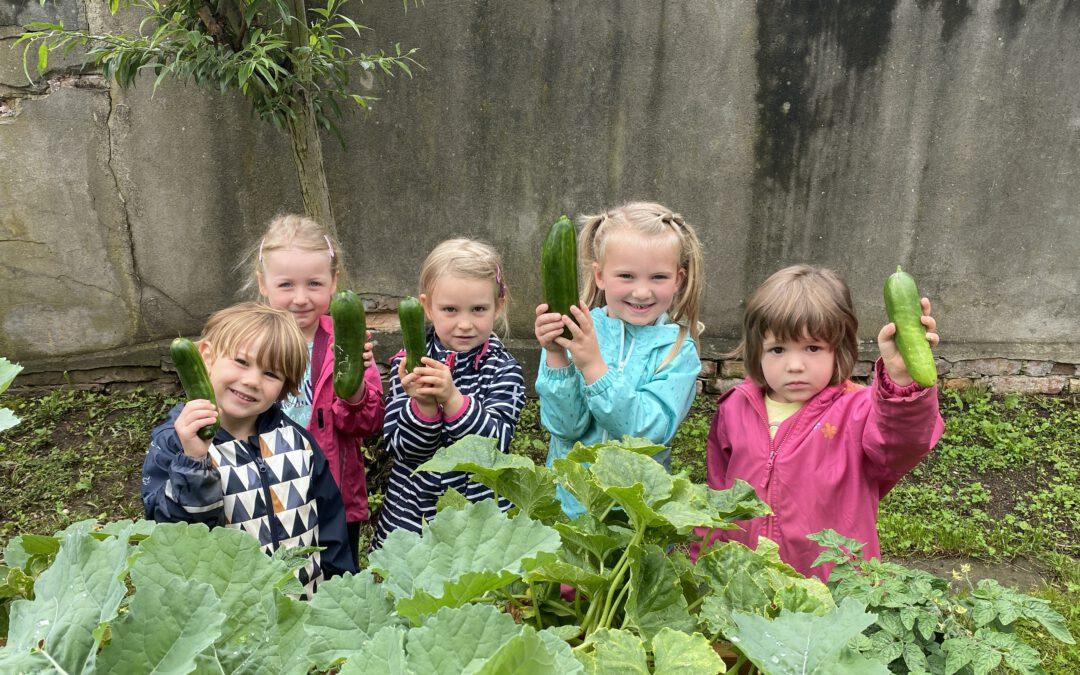 Regionalbudget unterstützt: Förderverein des Kindergarten Albertus-Magnus freut sich über neue Hochbeete